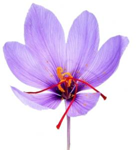 Eye health with saffron in macular degeneration