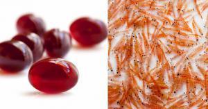 Krill Oil Market1
