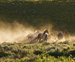 "Picture of wild horses running by documentary filmmaker James Anaquad Kleinert, producer-director of ""Disappointment Valley: A Modern Day Western."