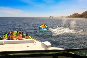 Whale Watching in Cabo San Lucas, Luxury Yacht Charter
