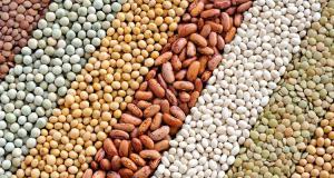 Animal Feed Additives Markets