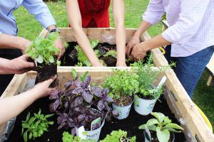 GooQuinoa gardening club