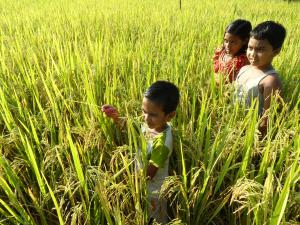 A group of children standing in a rice field. Sustainable Development Goals are the blueprint for a food and nutrition secure tomorrow