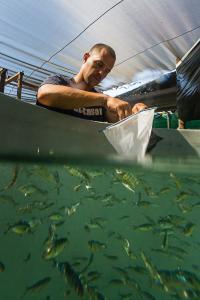 Credit: Hubbs-SeaWorld Research Institute