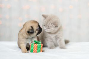 Market America | SHOP.COM Has Four Ways To Help Your Furry BFF Stay Healthy Through The Holidays & Beyond